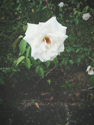 Enjoying Life Flowers,Plants & Garden