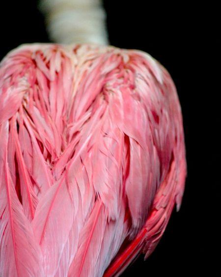 Pink spoonbill First Eyeem Photo pink bird Bird Pink Animal Wildlife Nature Wildlife & Nature Colour Of Life