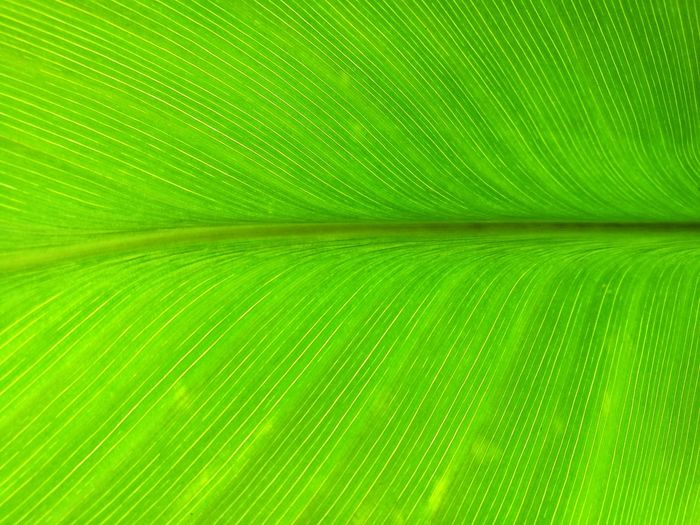 nuture green Backgrounds Frond Leaf Full Frame Textured  Close-up Plant Green Color Plant Life Natural Pattern Dew Leaf Vein Photosynthesis Fern Spider Web Stamen Blade Of Grass Delicate Leaves Palm Leaf Blossom In Bloom Focus Abstract Backgrounds Lush - Description Botany Relaxed Moments Drop RainDrop Lush Foliage