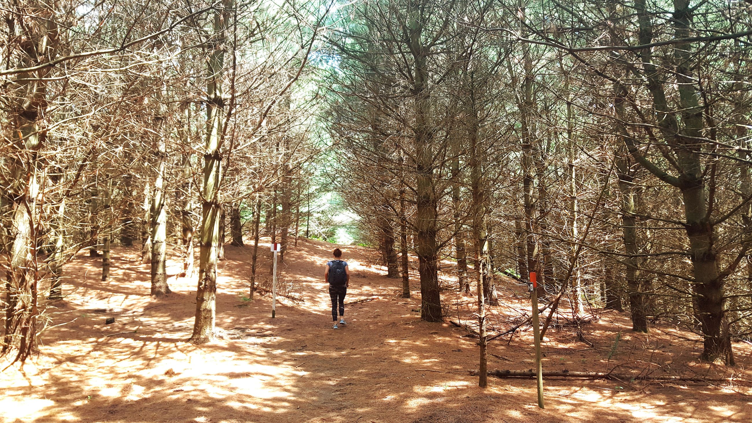 tree, bare tree, real people, one person, rear view, nature, outdoors, full length, day, men, branch, beauty in nature, people
