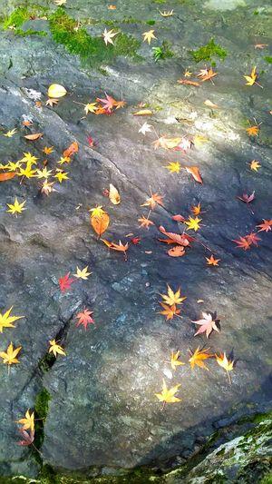 落ち葉🍂 紅葉 妙安寺
