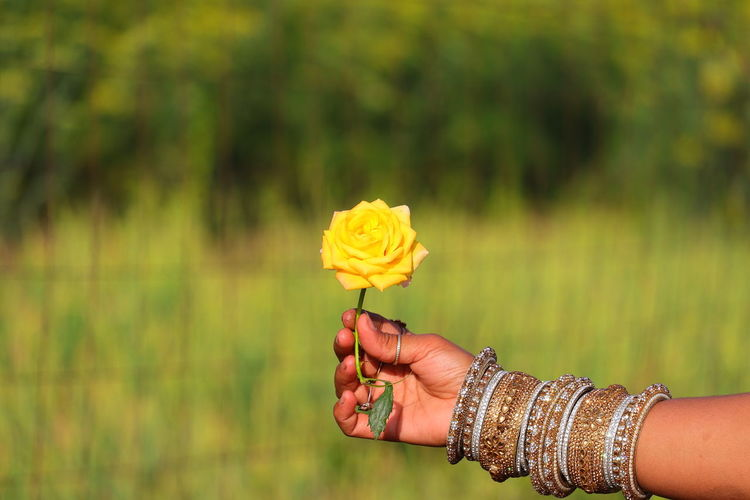 Yellow rose hold on girl hand with nature defocus background and copy space