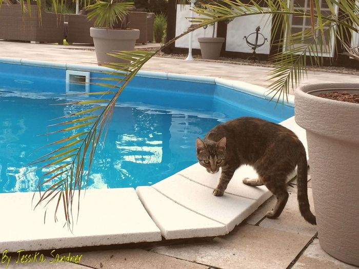 Katzen Katze Cat Cats Cat♡ Cat Lovers Swimming Pool Pool Animals Animal