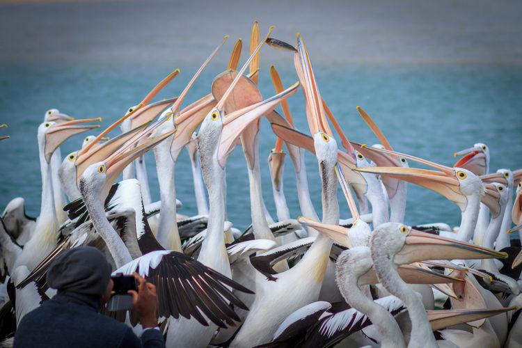 Close-Up Of Pelicans In Sea