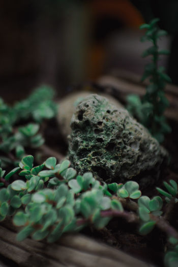 Close-up of green plant in moss