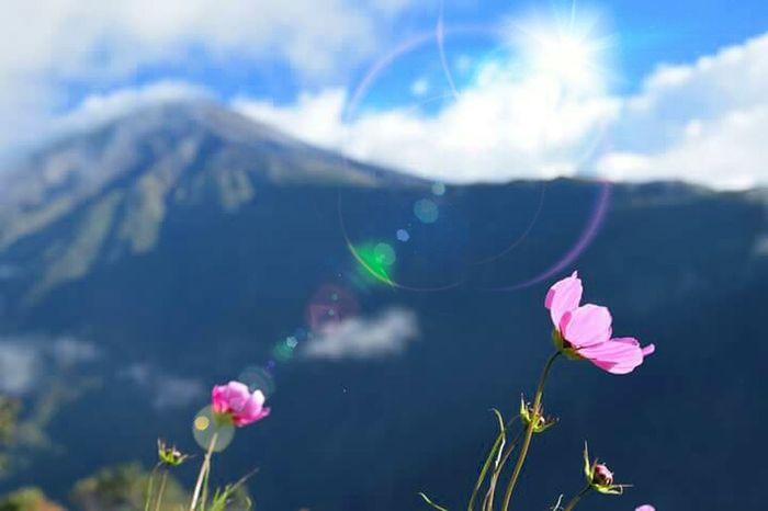Equateur Volcan Tungurahua Fleurs Flou
