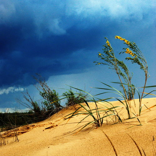 Scenic view of sand dune on beach against sky