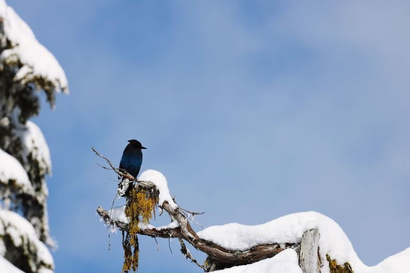 Low angle view of bird perching on snow