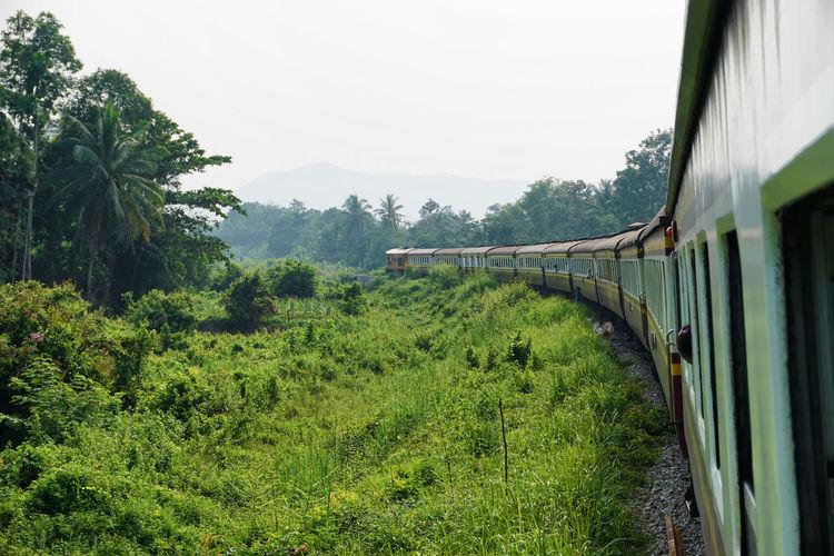 Train No. 151 Bangkok - Sungaiko-Lok Day Land Vehicle Outdoors Passenger Train Public Transportation Train Train - Vehicle Transportation Travel Tree
