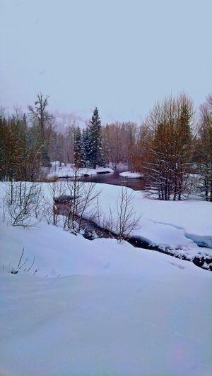 Cisco Grove, California. Winter Snow Winter Wonderland