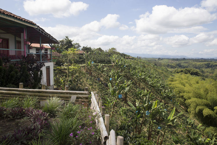 Typical landscape of Quindio, the heart of Colombia's coffee region. Andes Andes Mountains Coffee Coffee Plantations Colombia Green Coffee Region Landscape Lush Vegetation