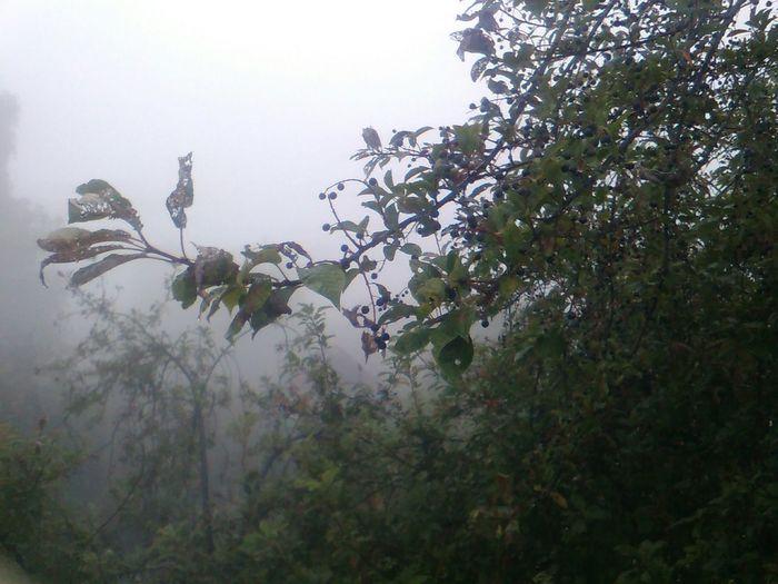 Просто так Fruit Tree Olive Tree Plant Life Orchard In Bloom Grove