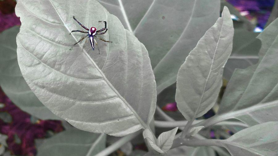 In Rhe Leaf Selective Focus Spider