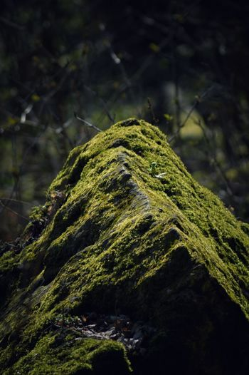 Green Color Forest Moss Nature Photography Nature Rock Rock Moss Tree Leaf 🍂 Leaf