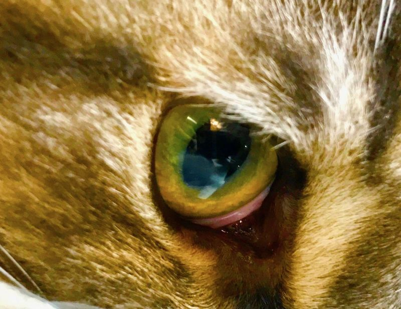 Color Details Domestic Animals Eye4nature Eye4photography  Iphone7 IPhoneography Iphonephotography Iris - Eye Nature Wood