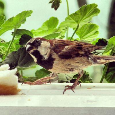 Bird Instagallerys Instagalleries Instagram igerscampinas
