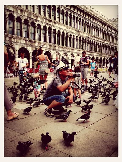 Taking Photos Of People Taking Photos Pigeons Venice, Italy