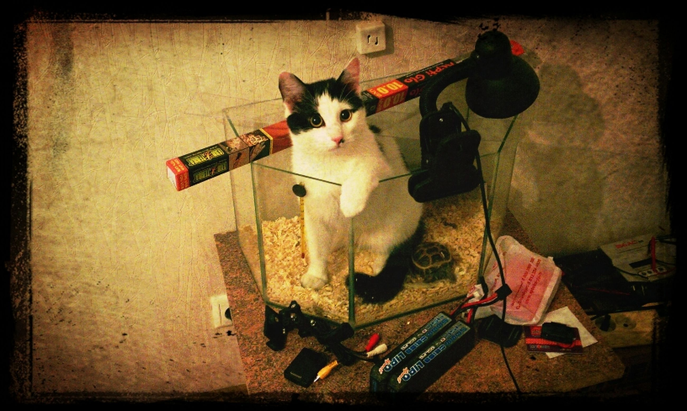 transfer print, domestic animals, pets, auto post production filter, one animal, domestic cat, mammal, animal themes, cat, feline, high angle view, sitting, indoors, full length, no people, looking at camera, portrait, vignette, toy, relaxation