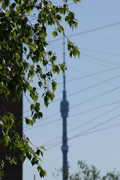 Cable Tree Electricity  Connection Growth Power Line  Power Cable Plant Nature Sky Electricity Pylon Power Supply Branch Day Green No People Steel Cable Tranquility Ostankino Ostankinotvtower in Moscow
