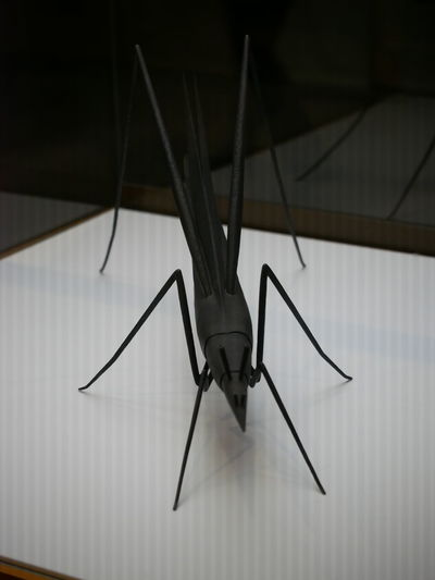 Museum Exhibit Insect Model G8 Lumix