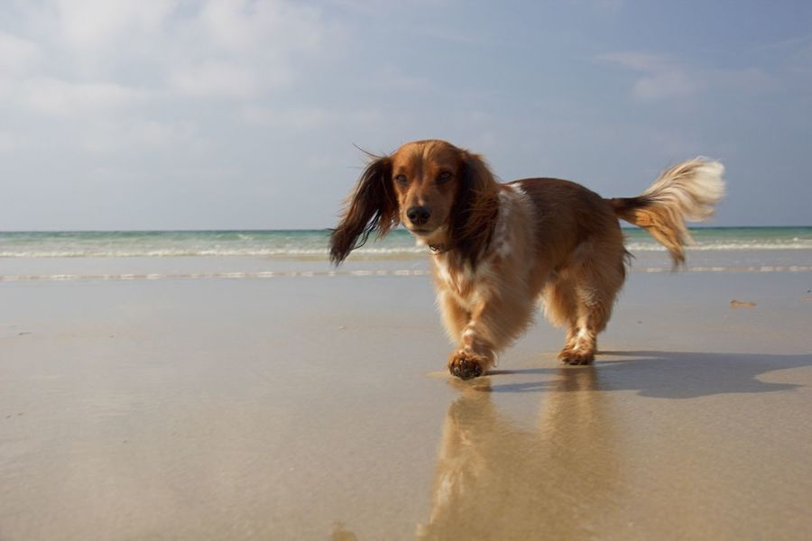 Teckel Dachshunds I Love My Dog Life Is A Beach Bretagne Dogs Traveling Animals Water Reflections The Last Days Of Summer