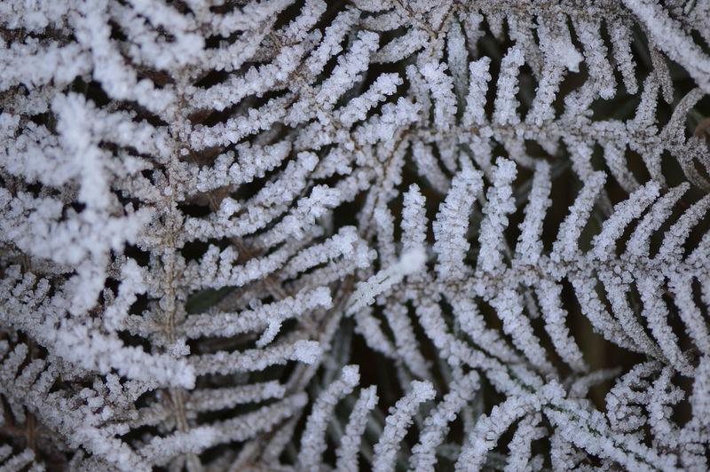 Full frame shot of frozen plants at night
