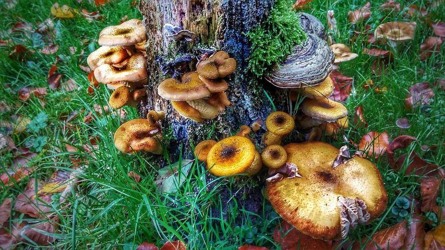 Leichlingen SinnesWald Pilze Im Wald Wald Wiese  Mushroom Wupper Oldwood Wood Wald Und Wiese Mühle Wietsche Leichlingen Wietsche Barn Pilze Sammeln Pilze Am Baum Pilze Herbstspaziergang Herbst Autumn Colors Autumn Nature Field Beauty In Nature Outdoors