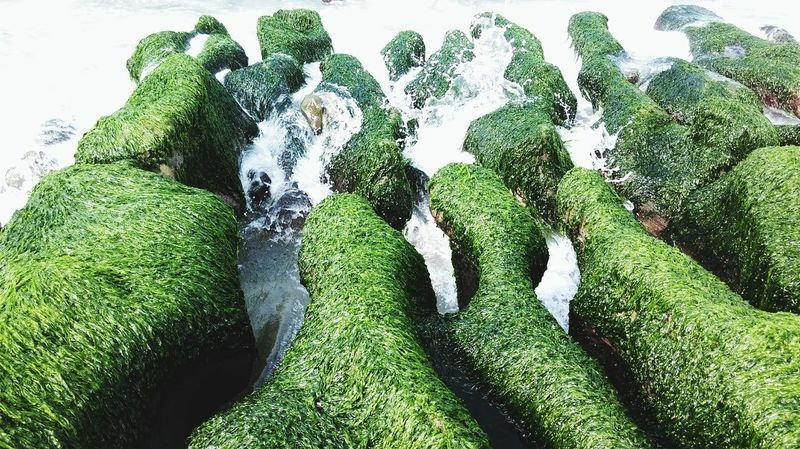 Ice Age Green Color Growth Moss Outdoors Beauty In Nature Nature Wonderful View Landscape Tranquility Creativity Group Of Objects The Great Outdoors - 2017 EyeEm Awards Neighborhood Map