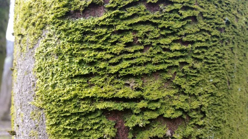 New Growth New Life Growing Greenery Tree Manchester Forest WoodLand Moss Close Up Moss On Trees Mossy Tree Moss Moss Covered Tree Moss In Macro Moss-covered Tree Bark Patterns Trees