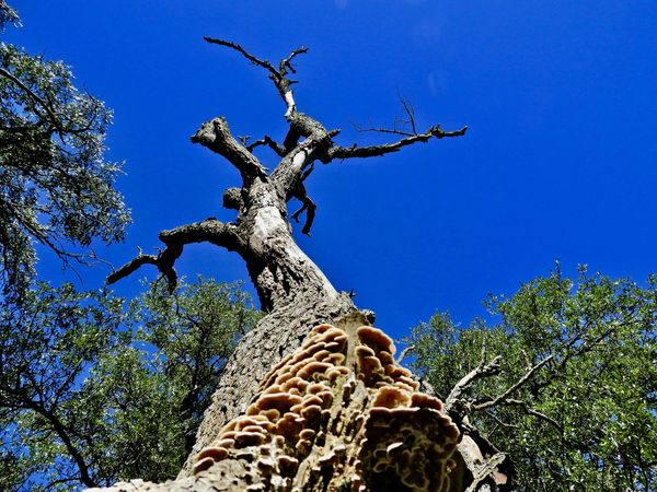Cycle of life and death Plant Tree Low Angle View Sky Blue Growth Nature No People Clear Sky Tree Trunk Beauty In Nature Day Outdoors Sunlight