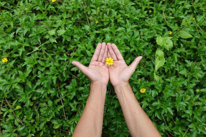 Human hand holding plant
