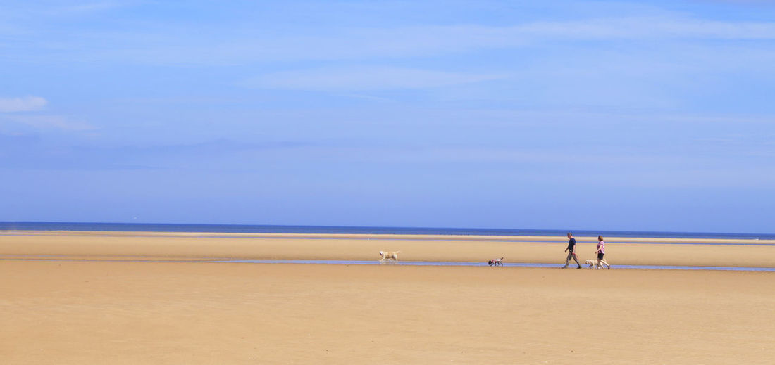 Mid distance view of couple with dogs walking at beach against blue sky