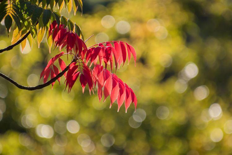 大阪城公園の秋色 Fall Season Fall Beauty Fall Colors OSAKA Japan Nature Nature_collection Tree Branch Defocused Leaf Multi Colored Red Beauty Autumn