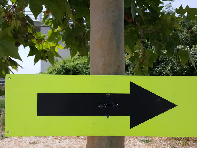 Left Right Sign Direction Directional Sign Direction Sign Course Route Arrow Sign Arrow Symbol Arrow Black Arrow Following Follow Guidance Tree Day Outdoors No People