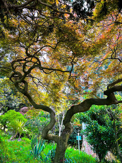 Low angle view of trees in park during autumn