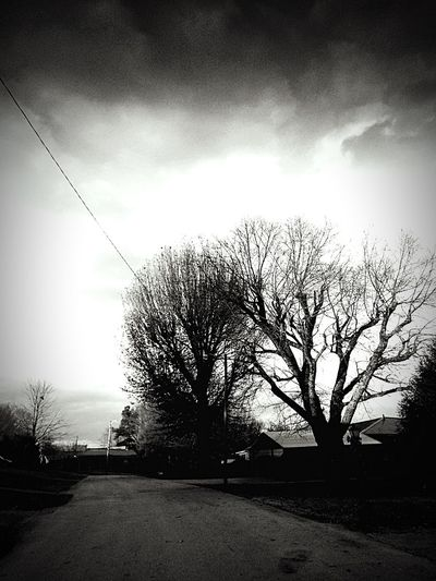 B&w Street Photography Dashboard View Winter Hibernation Leaves Barren Trees Clouds Sky