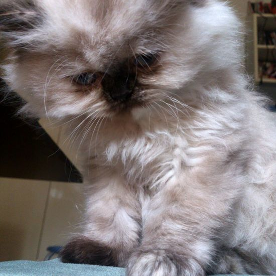 Cat Cat♡ Kitten Cute Animals