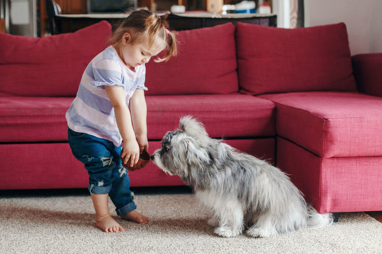 Toddler baby girl feeding pet dog with treat food. relationship of kid and domestic animals