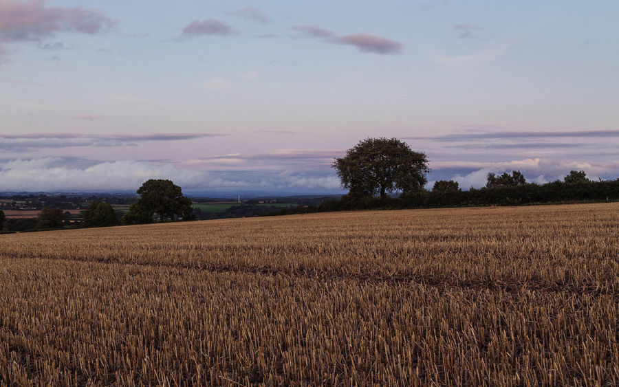 Shropshire landscape... As Far As The Eye Can See Harvest Season Low Clouds Trees Agriculture As Far As My Eyes Can See Beauty In Nature Cleobury Mortimer Corn Field Corn Fields Field Harvest Harvest Time Landscape Low Cloud Nature Pretty Sky Rural Scene Scenics Shropshire Shropshire Countryside Shropshire Landscape Sky Tranquil Scene Tranquility