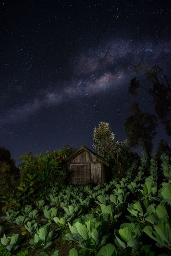 Barn amidst plants against sky at night