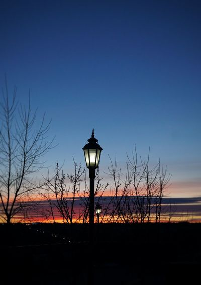 Winter Bushes EyeEm Best Shots Winter Trees Sunset_collection Nightphotography Sunset