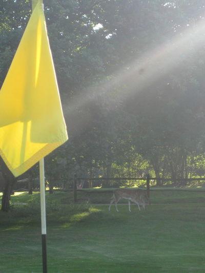 Deer Flag Golf Golf Course Light Nevill Golf Club Sunbeam Trees Tunbridge Wells Yellow
