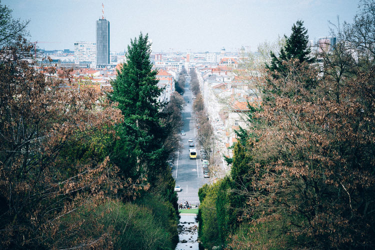 View of street in trees