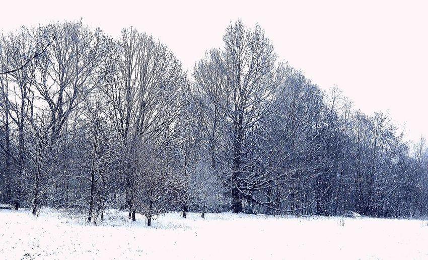 Snowy Tree Line Up