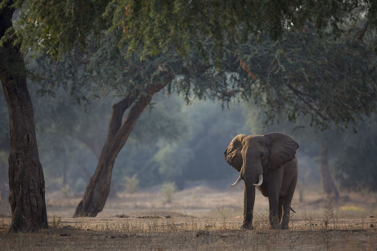 View Of Elephant On Landscape