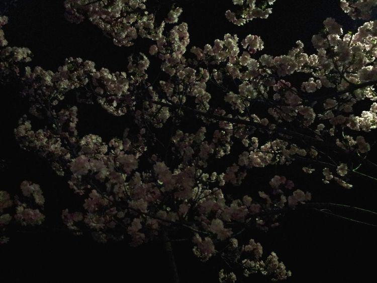 Nightphotography Darkness And Light Spring Tree Berliner Ansichten