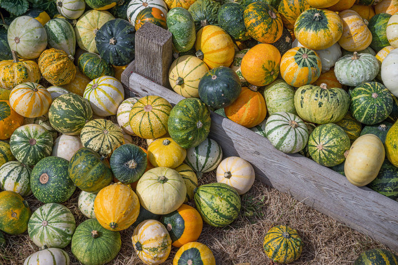 Full frame shot of pumpkins for sale at market stall