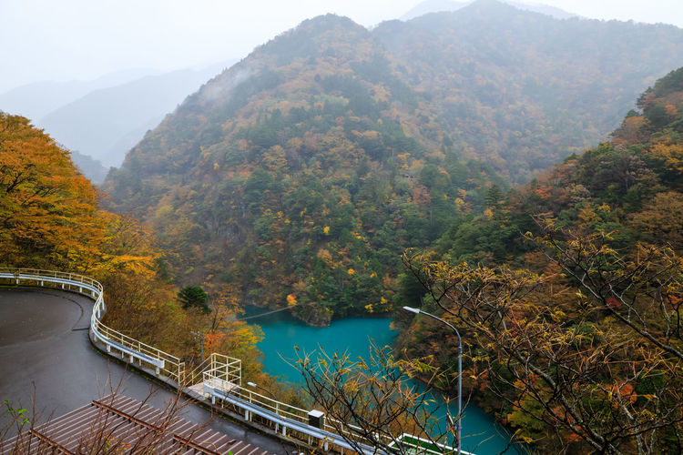 High angle view of river amidst trees during autumn