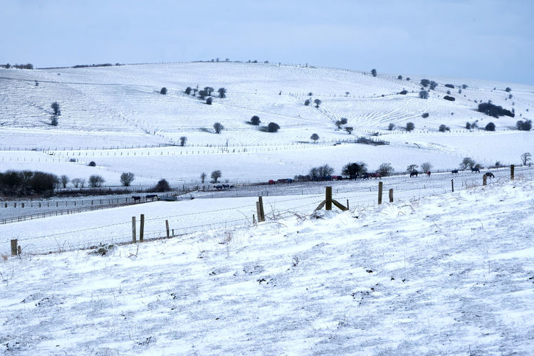 Rolling Hills South Downs Sussex Downs Sussex Countryside Animal Themes Beauty In Nature Brighton Uk Cold Temperature Day Farm Land Frozen Landscape Mammal Nature No People Outdoors Rural Scene Scenics Sky Snow Snow Covered Snow Covered Landscape Southdowns Winter
