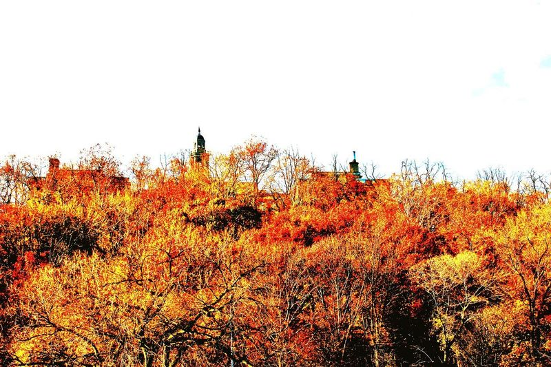 EyeEmNewHere Autumn Orange Color Nature Growth Tree Outdoors Change Beauty In Nature No People Leaf Plant Day Scenics Sky
